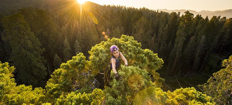 COOL STUFF: Last Tree Standing